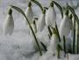 Ура! Скоро весна!